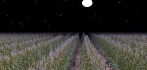 moonlight-on-a-field1