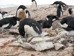 penguin-on-an-egg