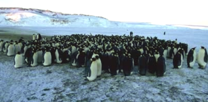 penguins-huddled-in-the-cold