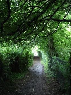 courses_meditation_mindfulness_retreat